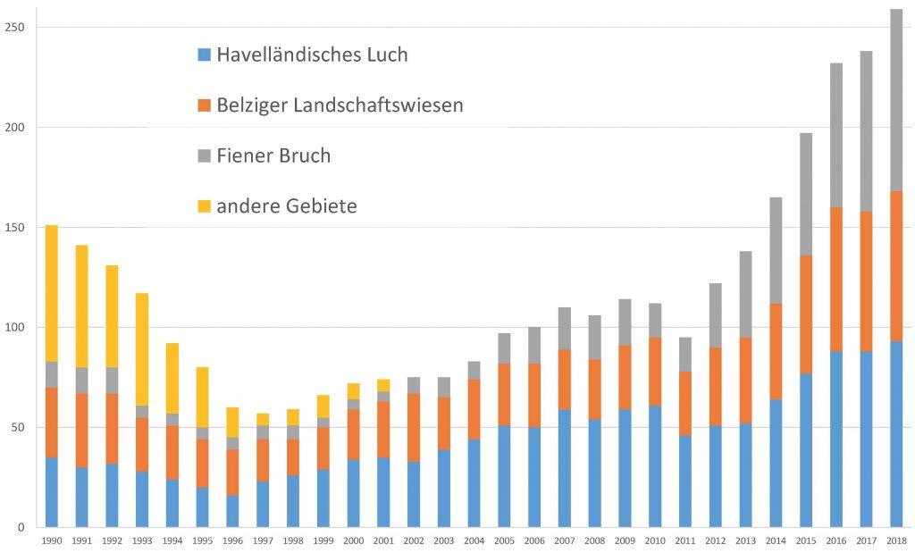 Seit einigen Jahren schon wächst der Bestand der Großtrappen in Deutschland kontinuierlich an. Nach vielen Jahren des stetigen Niedergangs.